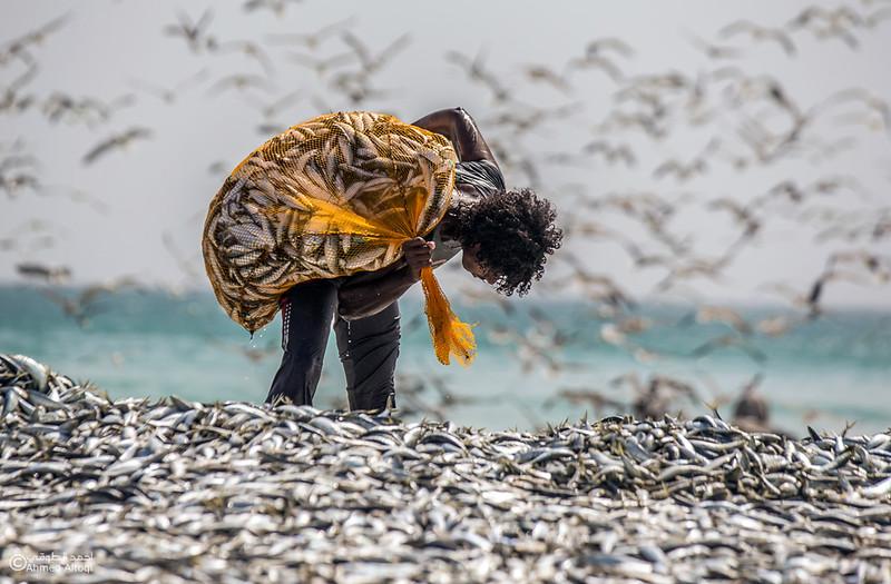 Sardine Season (49)- Dhofar.jpg