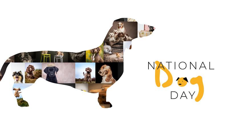 dog day 2.jpg