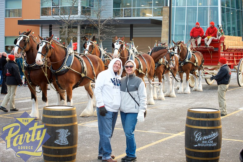Clydesdale Portraits 117.jpg