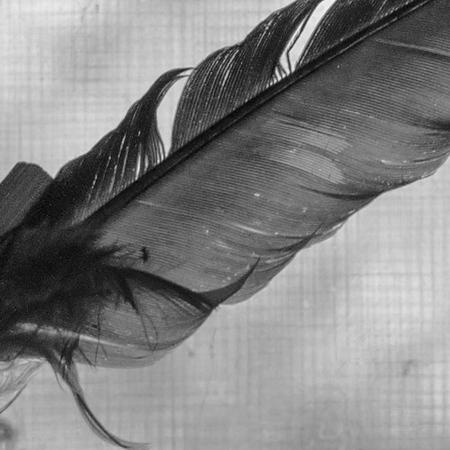 detail kitchen goddess's feather