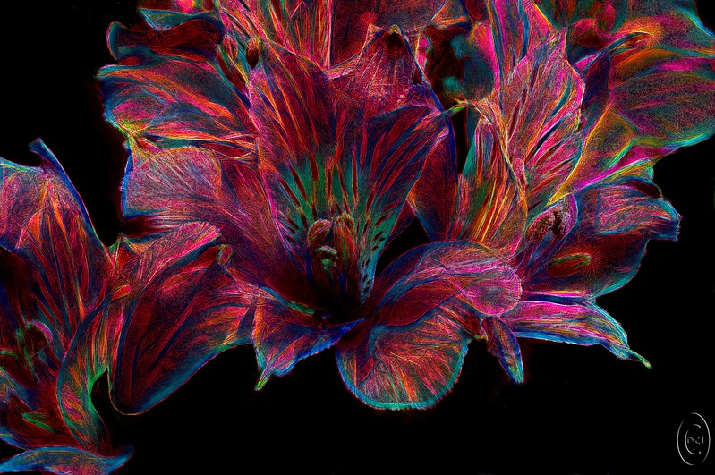 24 Mar 17One more of the creative flowers but this time in bright colors. This is from a bouquet that we had sitting on the dining room table and which after having taken a number of shots I was planning on placing on the scanner to grab a three dimensional image which I was than going to manipulate, a process I've wanted to do for some time but am just getting around to doing. Or at least that was the plan. By the time I got around to trying it the blossoms were too old to handle and each one I touched simply fell apart. So I have to get some more before attempting. Meanwhile, I did have the shots from the camera so I thought I'd play with one to see what I might come up with. This is one I liked; well, one example anyway. I used the same technique as before with the two previously shared shots but this time did some additional work after playing with the plug-in filter. The diagonal formed by the flowers supposedly gives the image some sense of action, or so photo critiques claim, so we'll just consider this an example of flora in motion. Or, for those of you in my age bracket, something you might have envisioned at one of the best forgotten parties. Or maybe just something that would look nice displayed on a shiny surface.  I painted out some of the stuff I didn't like, cropped what remained some, and then ran a Topaz plug-in on it. Nikon D300s; 18 - 200;  Aperture Priority; ISO 200; 1 sec @ f /13 on a tripod.