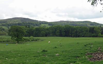 6)  Chillingham Wild Cattle