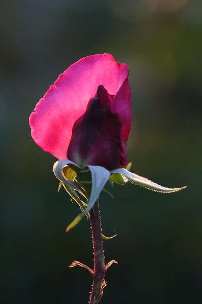 Hacienda Roses 9.jpg