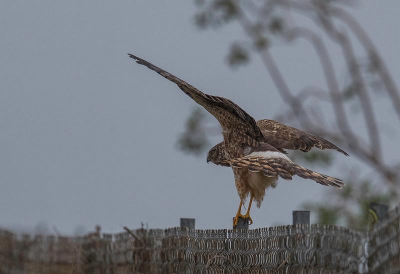 HNBH Birds1-8.jpg