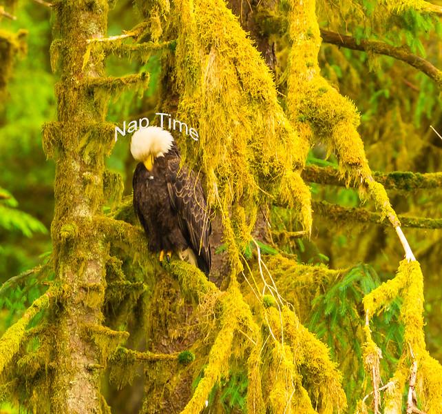 Eagle 11.jpg