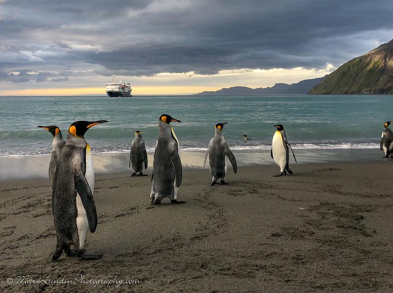 Antarctic-153