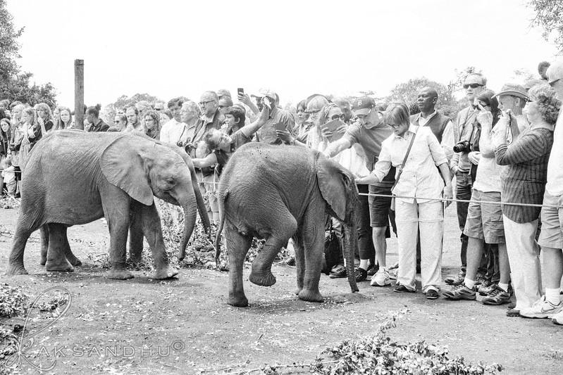 Safari-Africans-166.jpg