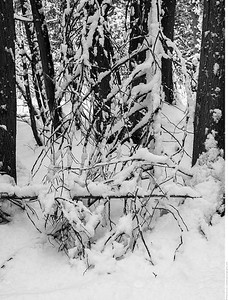 In the forest after snowfall