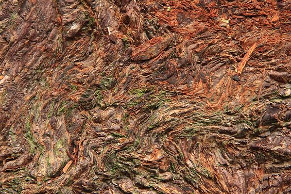 Sequoia ReWilding