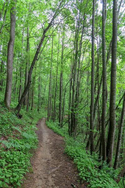 Ingles Field Gap Trail -- 2,470'