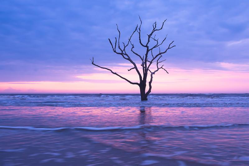 Tree at Boneyard Beach4.jpg