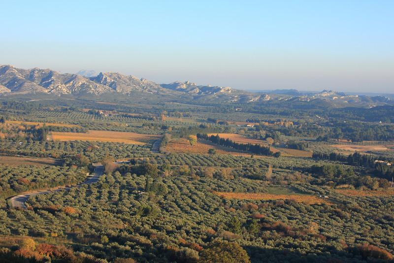Olives and Les Alpilles