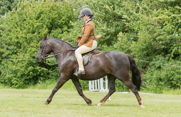 Ring 3 Best combination 14.2hh & under