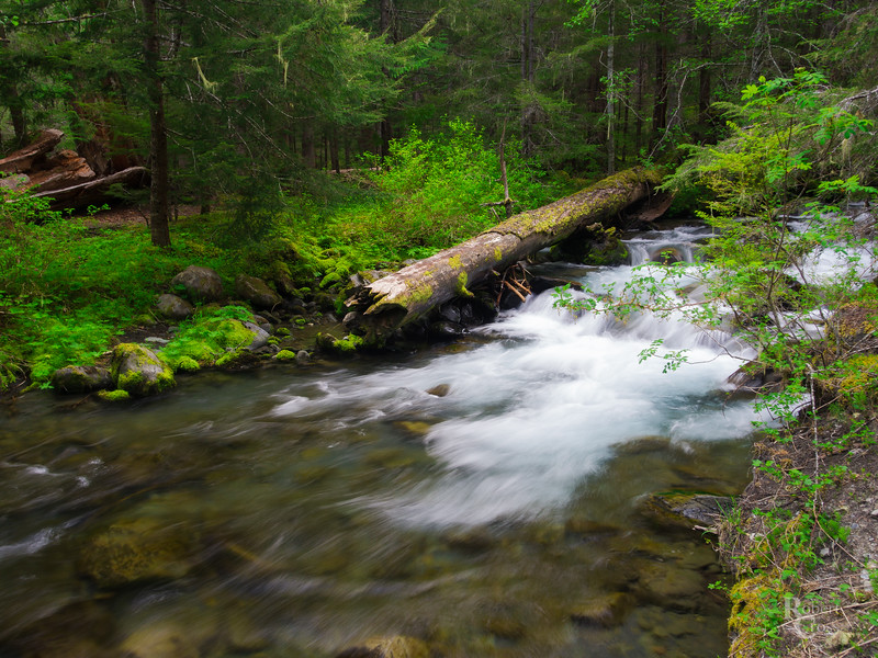 A Secluded Stream in the Olympics