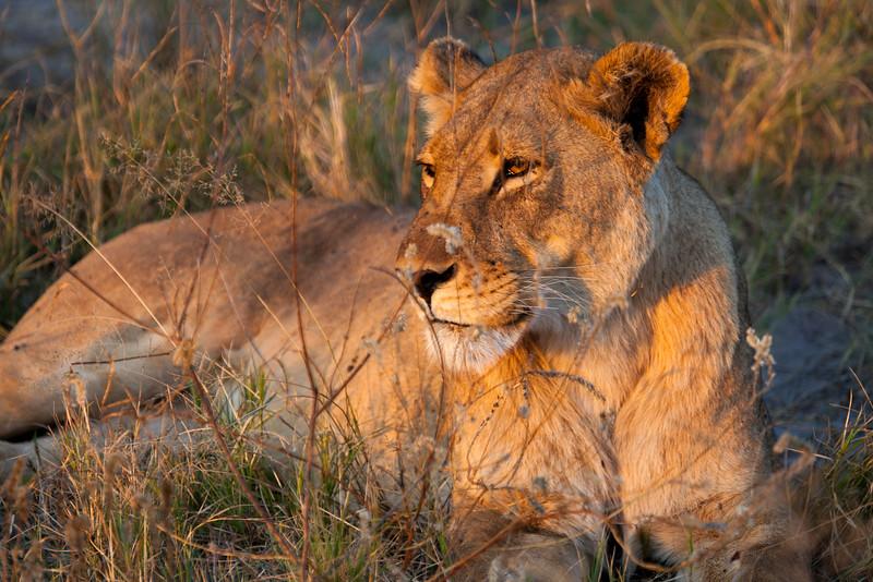 Botswana-53.jpg