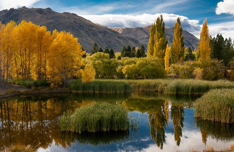 New Zealand fall.jpg