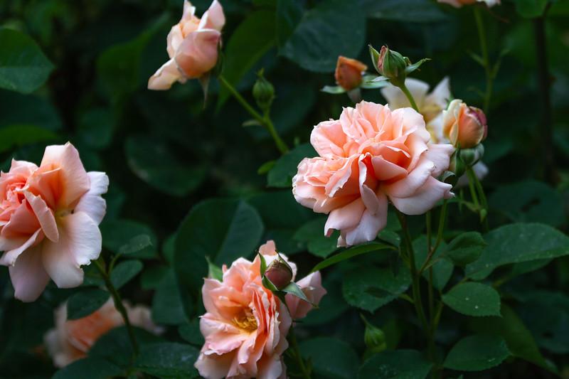 20180531_Garden-11.jpg