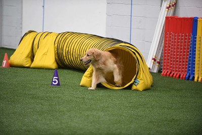 Artful Dodgers CPE Agility Trial August 18-19