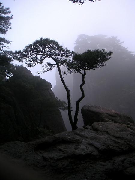 33 - Pine.jpg