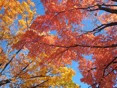 October walk 2007