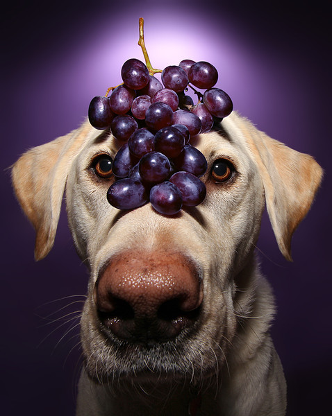 Purple Grapes.jpg