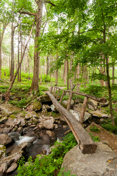 Roaring Fork Motor Nature Trail at Great Smoky Mountains National Park