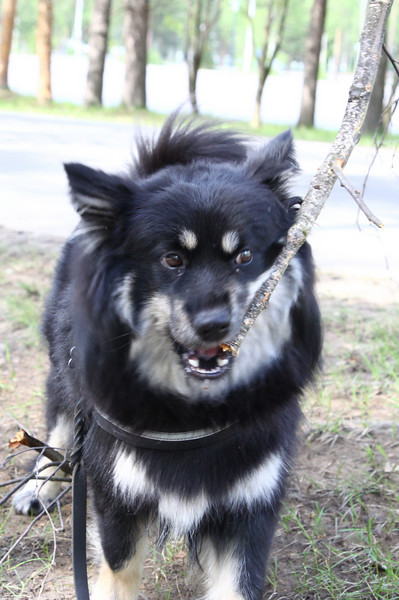 Dog chewing on branches