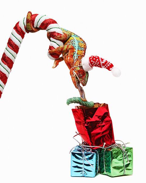 Opening Christmas Present 2.jpg