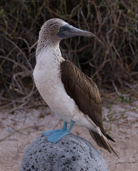 Galapagos_MG_4308.jpg