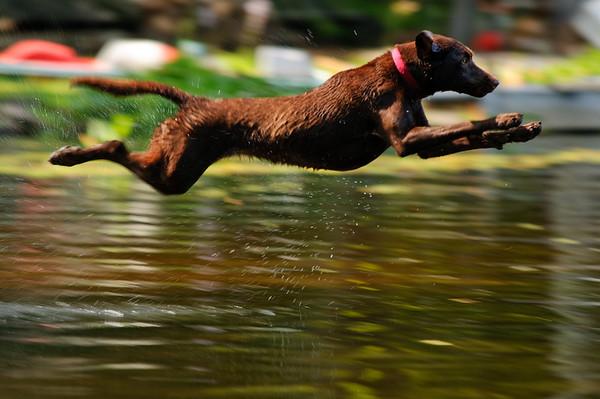 Dock Dogs Practice 1