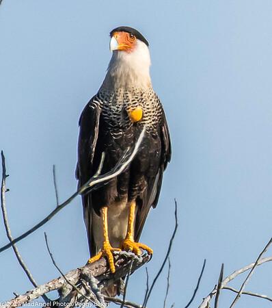 day 4 So FL Birding-497