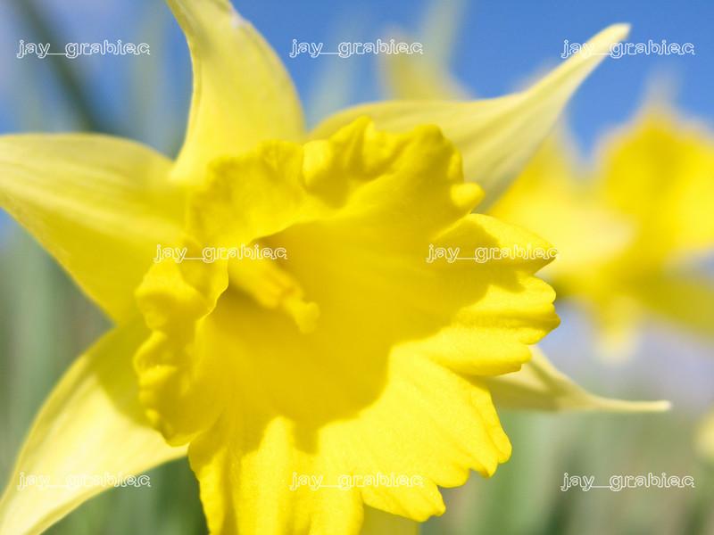 20100329_Flowers06.jpg