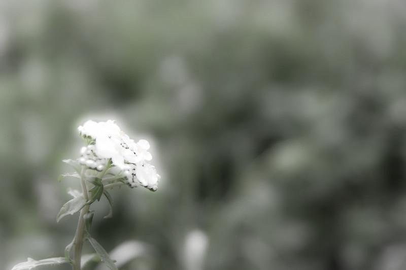 Photo of the Week - www.robertcain.info-30-Edit.jpg