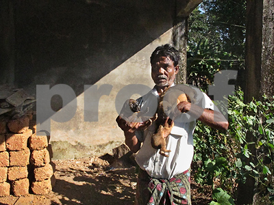 one-state-in-india-is-pushing-vigilantes-to-kill-stray-dogs