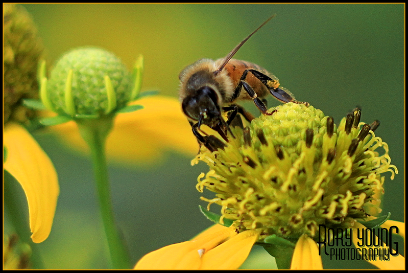 Bee07.png