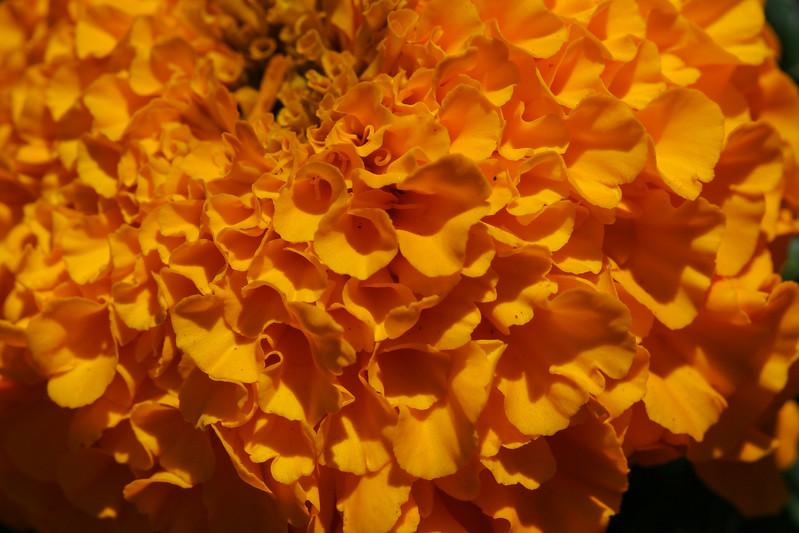 20070621-6179.jpg
