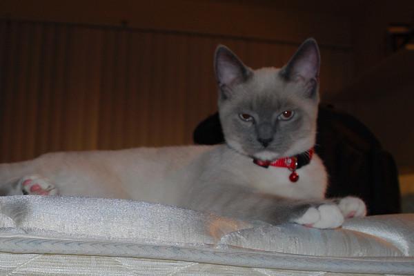 2007 07 09 - Cat Shots