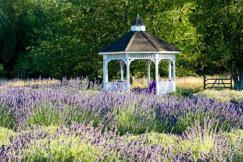 Evergreen Lavender Farm-137.JPG