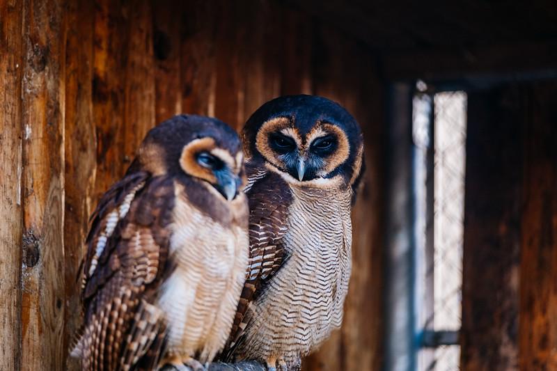 Tonis Zoo-0391.jpg