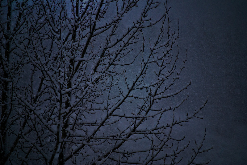 Branches in snow storm.