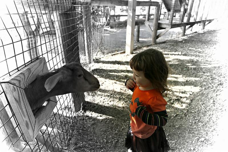thia goat 1.JPG