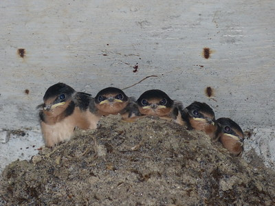20160628B Birds & Nests