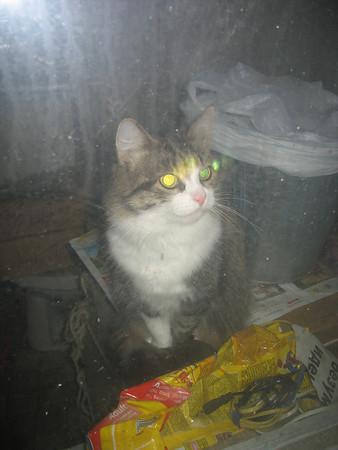 2009-03-24, Muska the Cat