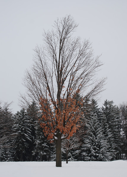 Winter tree .jpg