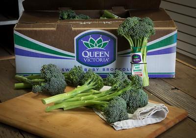 Ippolito Sweet Baby Broccoli 6-29-17