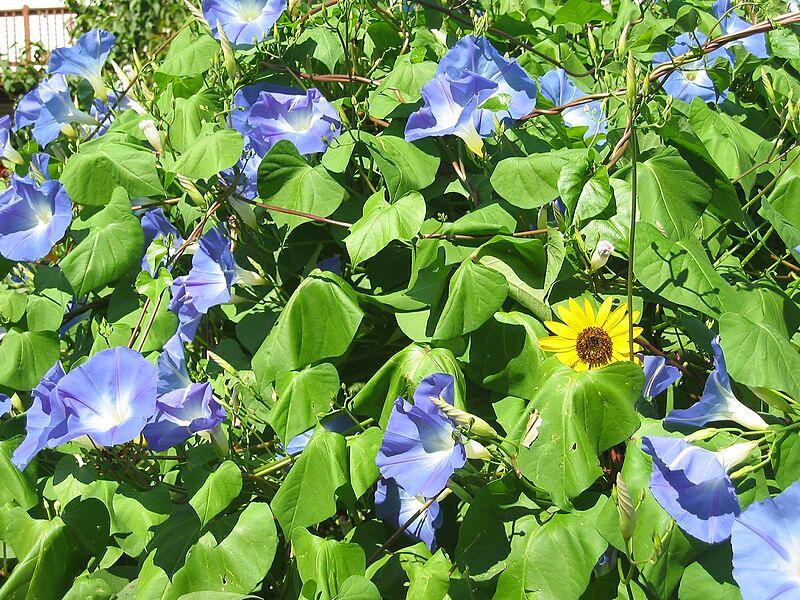 garden-2005-09-0380_std.jpg