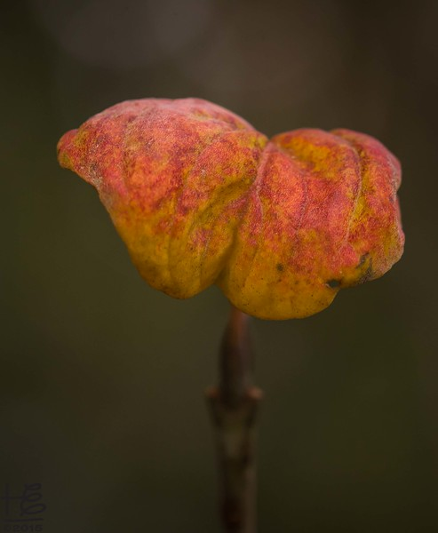 Simple fall leaf