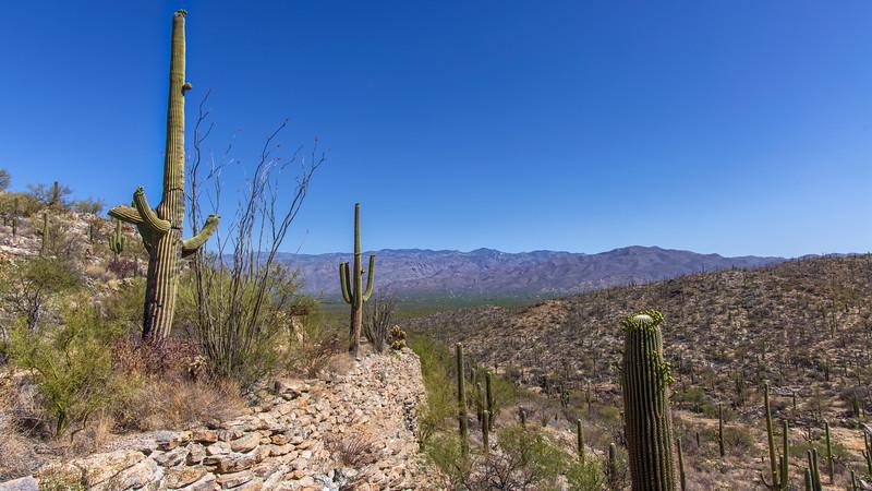 The Saguaro Descent