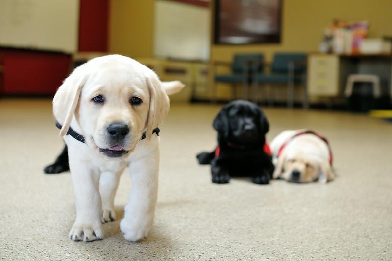 2014-08-27 S Litter Posed Pupppy Photos 019.JPG