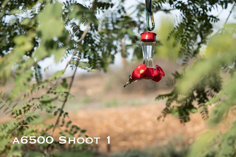 a6500 macro - Shoot 1-7.jpg